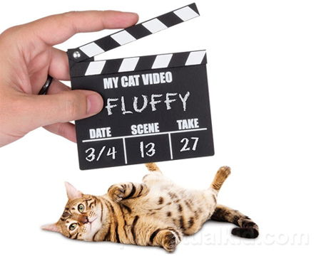 cat-video-clapperboard
