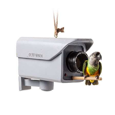 security_camera_birdfeeder