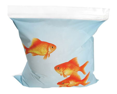 goldfish-sandwich-bag