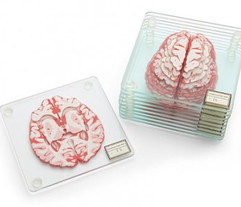 brain-specimen-coaster
