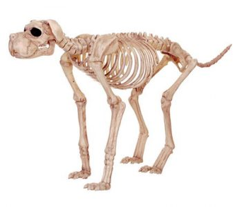 large-skeleton-dog